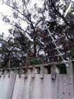 宁夏哪里批发电子围栏