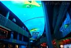 酒店LED天幕屏價格