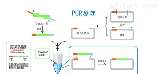 冬虫夏草染料法PCR鉴定试剂盒