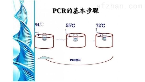 构巢曲霉探针法荧光定量PCR试剂